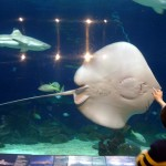"Vancouver Aquarium – ""The Secret World of Sharks and Rays"" Media Preview"